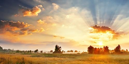 Sunny Dawn Field