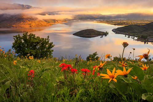 Spring wildflowers above Heber Valley at sunrise, Utah, USA